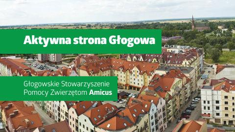"""Film z serii """"Aktywna strona Głogowa"""": Głogowskie Stowarzyszenie Pomocy Zwierzętom Amicus"""
